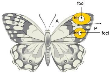 Butterflywiki